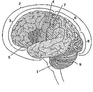 Brainarchit